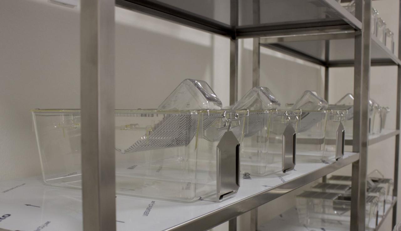 Deney Hayvanları Uygulama ve Araştırma Merkezimiz Faaliyetlerine Başladı