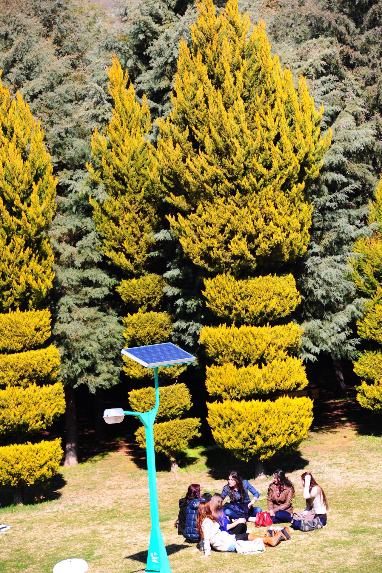 MSKÜ Is Amongst The Greenest Universities of The World